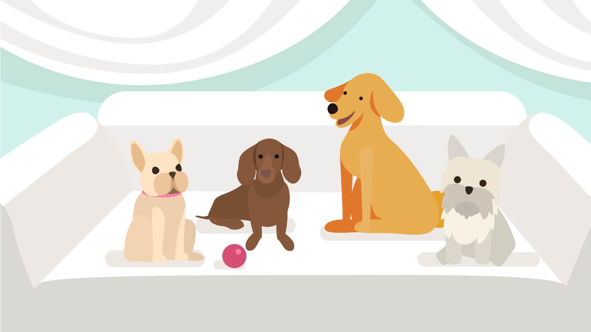customer service videos - pets